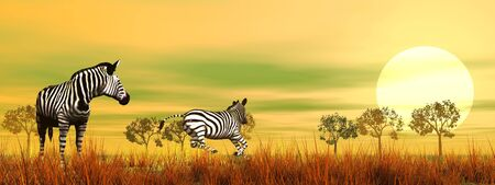 Zebras in the savannah by beautiful sunset Stock Photo - 16032681