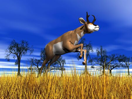 Pronghorn antelope jumping upon yellow grass in the nature with trees and blue sky photo