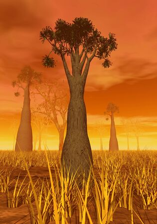 Baobabs in the desert by orange sunset photo