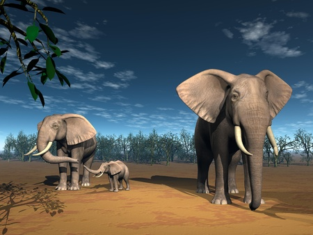 Three elephant for a family in the savannah by beautiful day photo