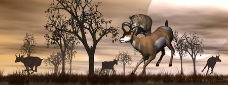 deer hunting: Lioness jumping on an antelope and others running away in the nature by orange sunset Stock Photo