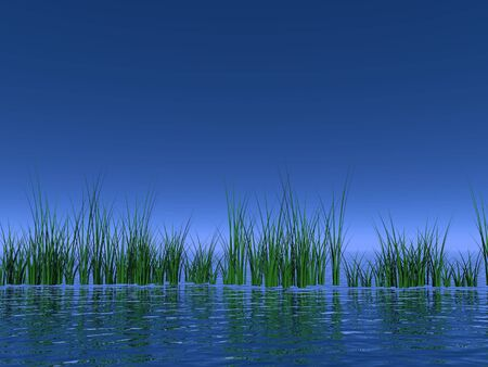 Green grass in the ocean in deep blue background photo