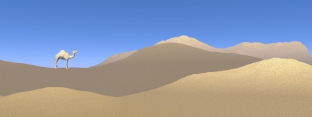 barren: One camel standing on a sand dune in the desert by beautiful day