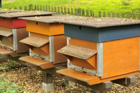 apiculture: Colorful beehives in a row in the nature Stock Photo