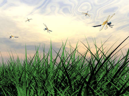 Several dragonflies flying upon green grass by sunset Stock Photo - 16250704