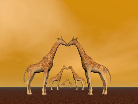 Several giraffe couples in brown background photo