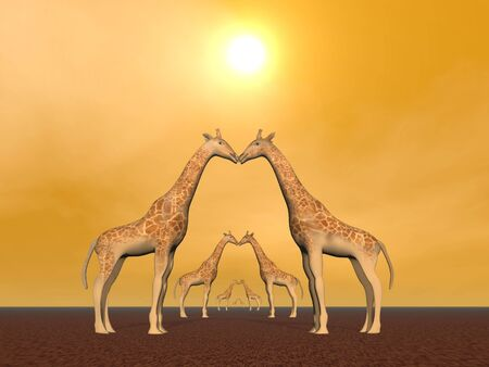Several giraffe couple in by sunset photo