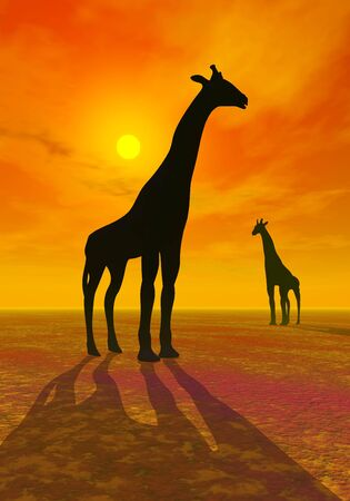 Shadows of two giraffes by beautiful red sunset in the desert photo