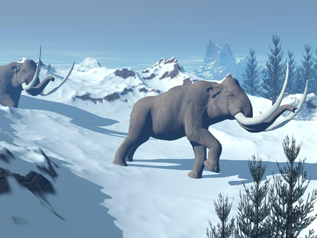 black mammoth: Two big mammoths walking slowly in the snowy mountain