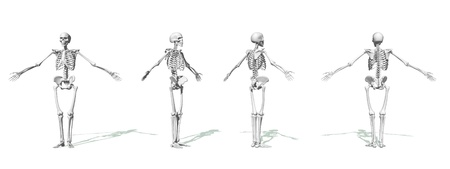 Four white skeleton face, side and back in white background Stock Photo - 16250656