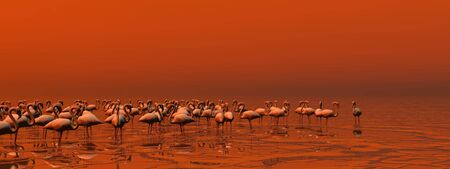 Flock of flamingos standing peacefully in the water by red sunset photo