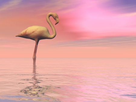 One flamingo standing peacefully alone in the water by cloudy sunset photo