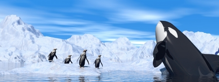 orca: Penguins and orca meeting among icebergs by cloudy day