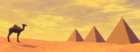 One camel standing in front of three mysteus pyramids in the desert by sunset Stock Photo - 16560091