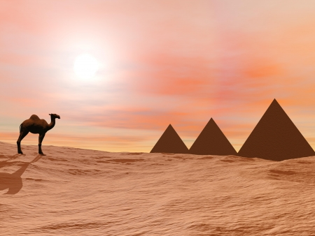 One camel standing in front of three mysterious pyramids in the desert by sunset Stock Photo - 16560201