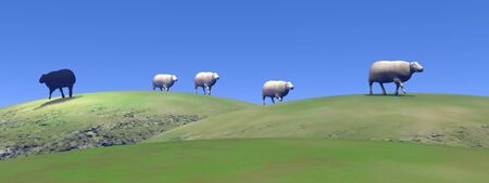 unhappy family: Black sheep leaving other white sheeps upon green hills by beautiful weather Stock Photo