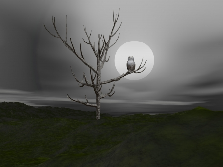 White owl standing on a branch in front of moonlight photo