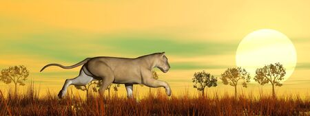 Lioness running in the savannah by sunset Stock Photo - 16801287