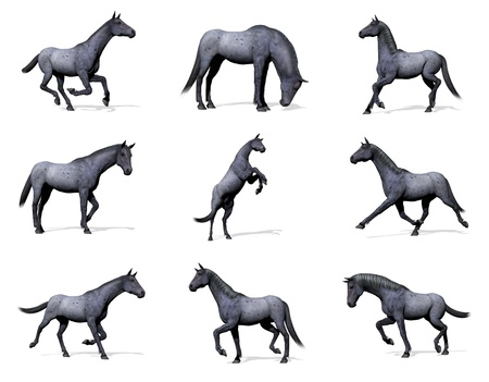 Set of nine poses of blue roan horse with shadow in white background Stock Photo