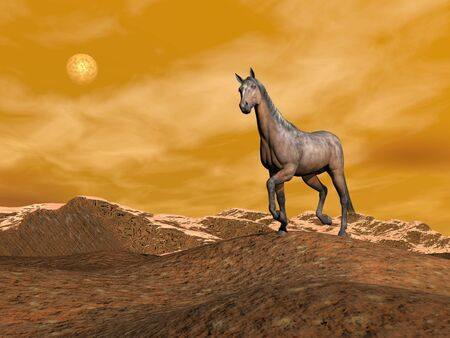 Beautiful brown horse standing on a hill in the mountain with snow by night photo