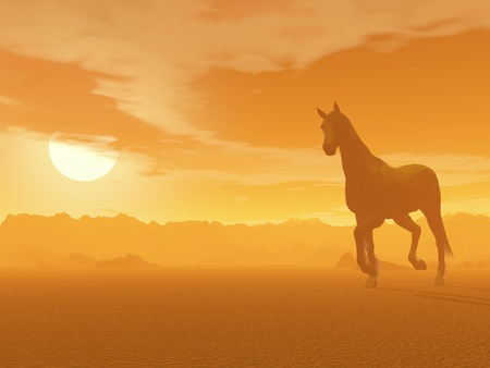 foggy: Beautiful horse trotting in the desert by foggy sunset