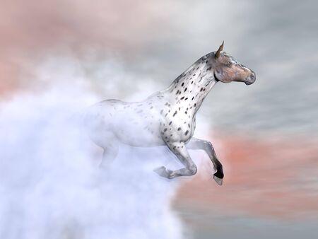 appaloosa: Beautfiul leopard horse running among fog and clouds