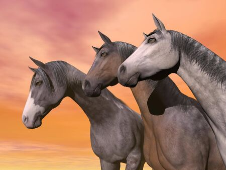Portrait of three different horses quietly standing together in front of orange sunset sky photo
