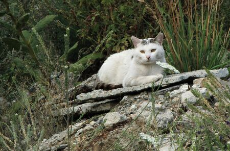 Quiet cat lying on a stone relaxing outdoor in the nature Stock Photo - 17431430