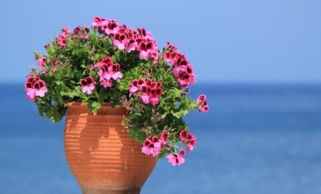 ollas de barro: Hermosas flores de geranio en una maceta delante del oc�ano Foto de archivo