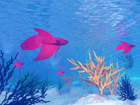 betta: Several red betta fish under water Stock Photo