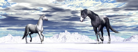 One colorful male and one white  female horses meeting by cloudy winter photo