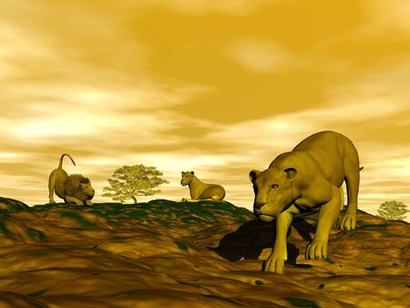 chasing tail: Group of lions in the savannah by sunset Stock Photo