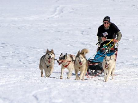 PLATEAU MOSSES - LA LECHERETTE - MARCH 10 : international race sled dogs on March 10, 2013 at plateau Mosses - La Lecherette, Switzerland.