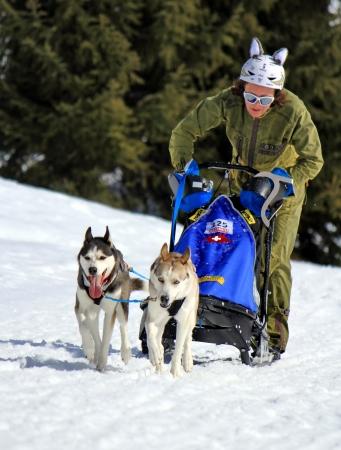huskys: PLATEAU MOSSES - LA LECHERETTE - MARCH 10 : international race sled dogs on March 10, 2013 at plateau Mosses - La Lecherette, Switzerland.