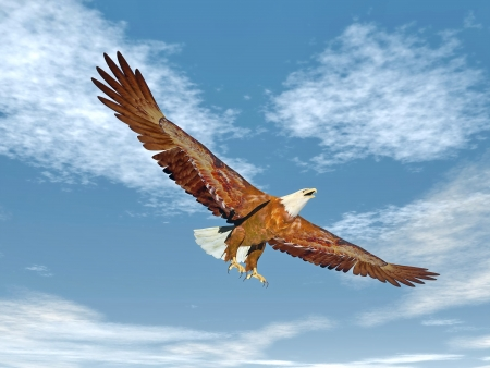 Beautiful eagle flying with wings wide open in blue cloudy sky Stock Photo
