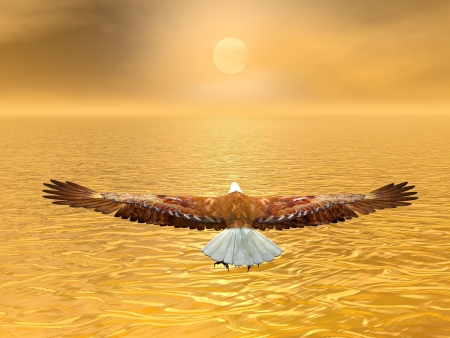 Eagle flying to the sun by brown sunset over the ocean