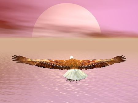 Aigle vole au soleil au coucher du soleil nuageux sur l'océan Banque d'images