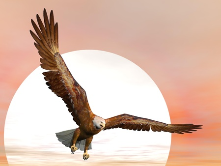 aerial animal: Eagle flying in front of big sun Stock Photo