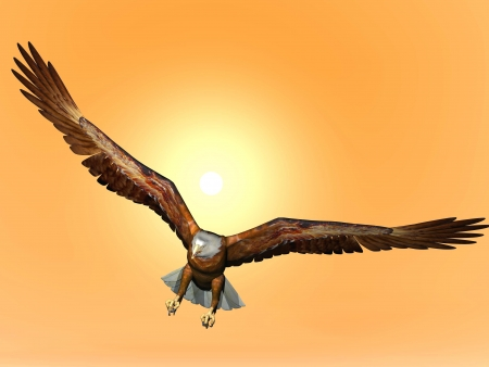 Eagle flying in front of big sun photo