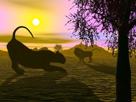 Shadow of a lion and a lioness in the savannah by sunset photo