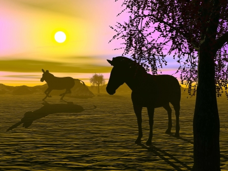 Shadow of two zabras standing in the savannah by sunset photo