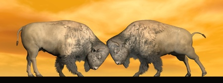 Two bisons fighting head against head in orange brown background photo