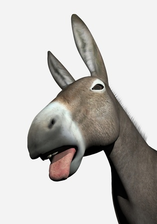 Portrait of a donkey with open mouth and tongue outside in white background photo