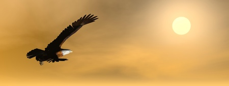 Eagle flying to the sun by cloudy brown sunset photo