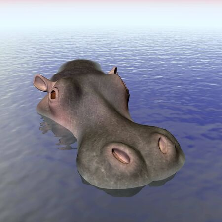 Head of an hippopotamus out of the water photo