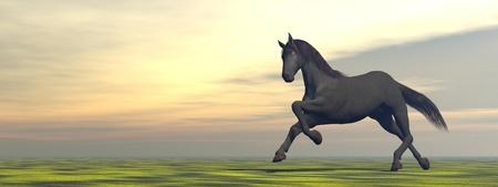 Horse running alone in thegrasslandt by sunset lights photo