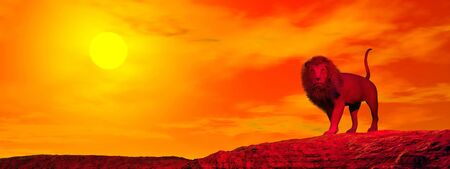One lion standing alone in the desert by red sunset Stock Photo