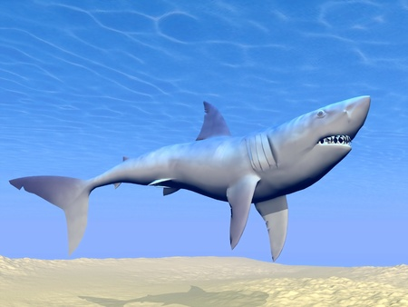 sand shark: Shark swimming underwater upon sand and with reflections of the sun Stock Photo