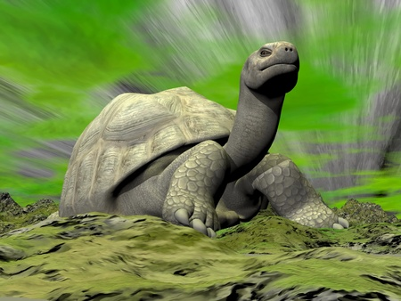 slowness: Galapagos tortoise standing on grassy ground in dark green background