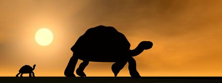 slowness: Shadows of mum galapagos tortoise showing the way to its child by sunset